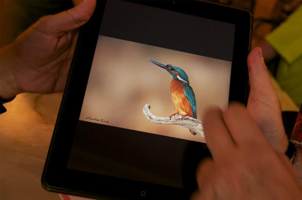 Vemos una colección magnífica de aves
